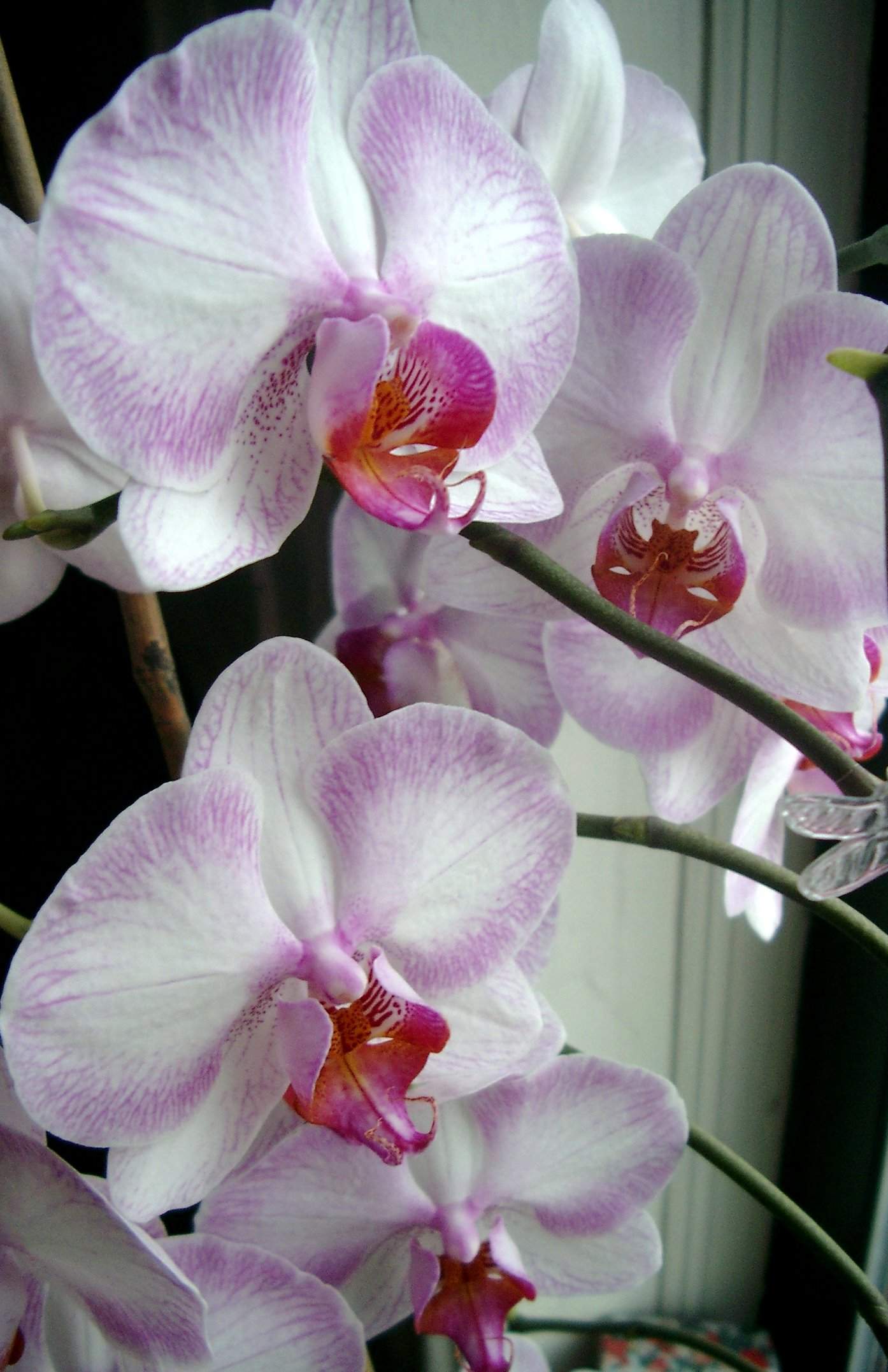 Garden Decoration Orchid Flowers