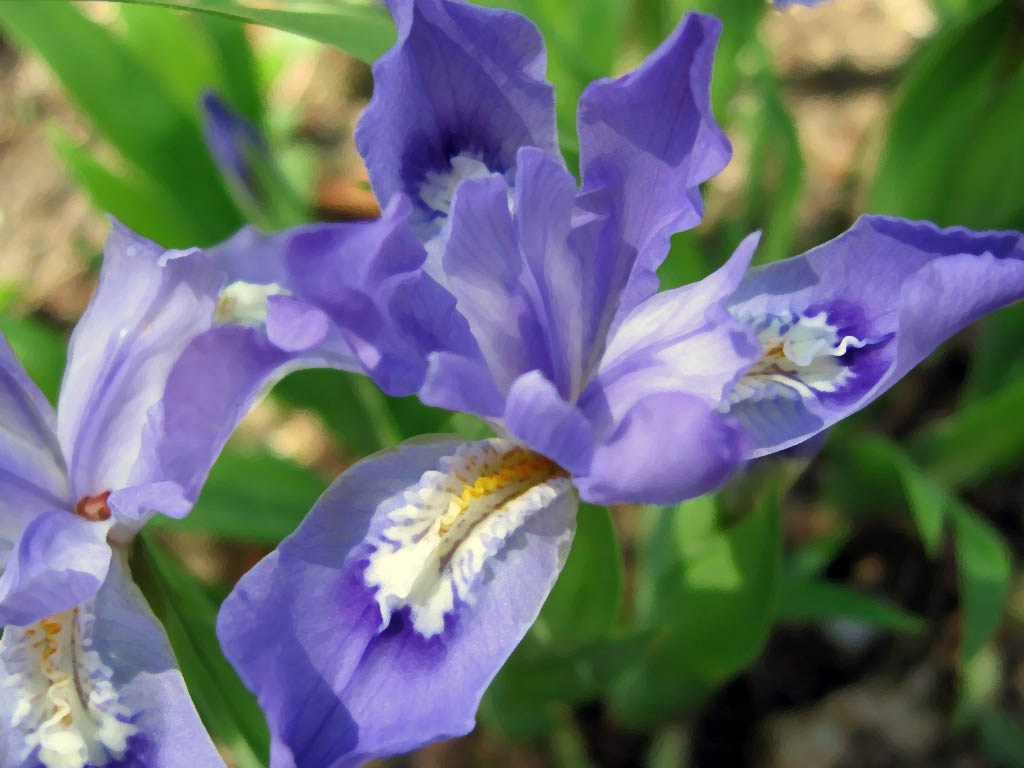 List Of Spring Flowers That Are Perennials Orchid Flowers