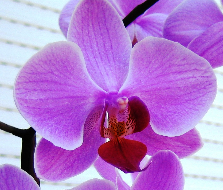 orchid flower wallpaper  flower hill design company, Beautiful flower