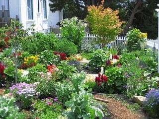 Wild Flower Gardens on Pinterest Flowers Garden Wild