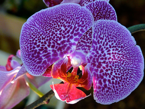 basics of growing orchids  orchid flowers, Natural flower