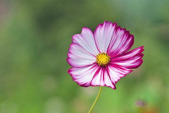 Flowers that bloom best in summer heat orchid flowers