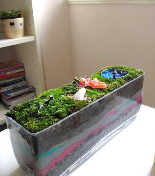 Growing Indoor Moss Garden