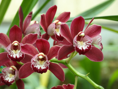 useful tips on repotting orchid plants orchid flowers