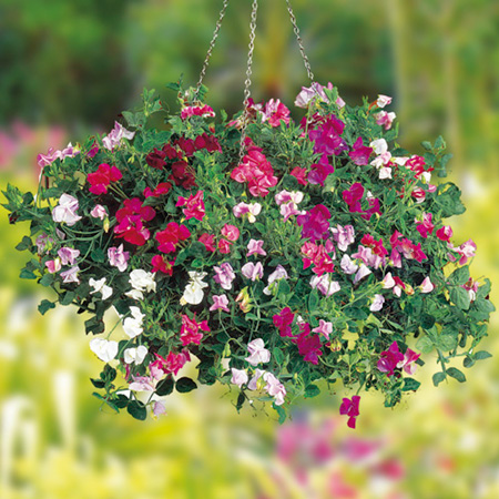 Flowers to choose for hanging baskets orchid flowers Hanging basket flowers
