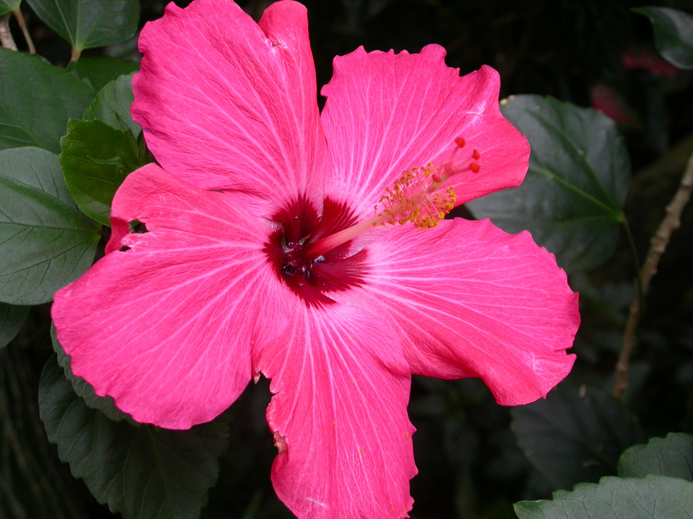 Flowers Blooming in August